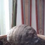Billig Kokospalme i Lidl
