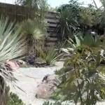 Masser af tropiske planter i en have i Tyskland