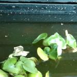 flyder...altså planter i vand