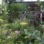 Eksotiske haver i Skandinavien...kan det virkelig lade sig gøre?